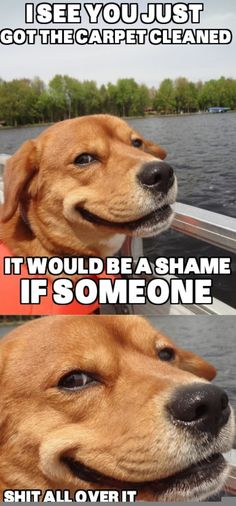Attack Of The Funny Animals – 42 Pics Animal Memes, Funny Animals, Cute Animals, Smiling Animals, Funny Dog Pictures, Animal Pictures, Random Pictures, Shih Tzu, I Love Dogs