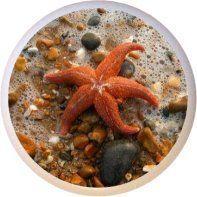 Starfish Beach Ocean Drawer Pull Knob Farm Fresh Knobs & Pulls http://www.amazon.com/dp/B004LJ0WUO/ref=cm_sw_r_pi_dp_GsAWtb06C7V2GH4D