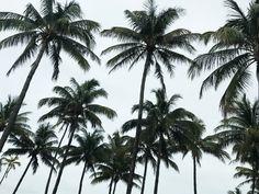 Goodmorning 🌴   #kisterss #miami #miamibeach #palmtrees #vacay