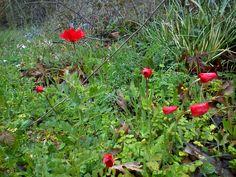 Lepreo, Ileia, Peloponnese-Greece Greece, Plants, Greece Country, Plant, Planets