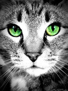 Green Eyes by gypsymarestudios, via Flickr