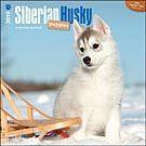 Siberian Husky Puppies 2015 Wall Calendar: 9781465027115 | Siberian Huskies | Calendars.com