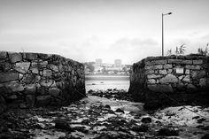 Reserva Natural do Estuario do Douro, perto da Afurada – Gaia. Espécies: guarda-rios, corvos marinhos, garcas reais, macaricos das rochas, garcas brancas
