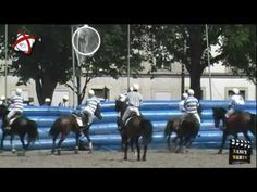 Championnat de Horse Ball à Nancy, Place Carnot Equestrian, Horses, Sports, Animals, Hs Sports, Animales, Animaux, Horseback Riding, Sport