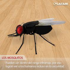 #Mosquitos #Ojos