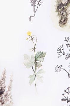 Vyrobeno Lesem_Herbarium_Michal Bačák