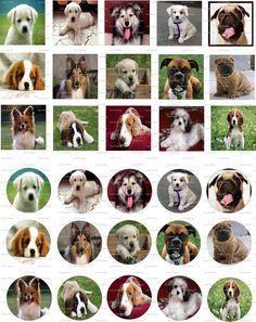 Dogs Digital Collage 1 inch / 60 by LisaChristines on Etsy, $1.50
