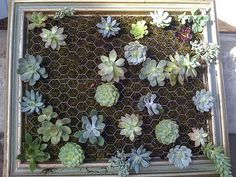 I saw this in a magazine recently.  Find and refinish vintage/rustic frames to your liking.  Add soil, moss, and chicken wire.  Plant Succulents and let them grow.  This is perfectly lovely as outdoor wall/fence art.