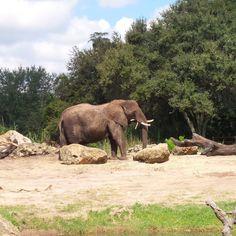 Disney's Animal Kingdom at Walt Disney World in Orlando, Florida, USA Florida Usa, Orlando Florida, Walt Disney World Orlando, Animal Kingdom, Elephant, Park, Blog, Travel, Animals