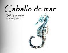 Quotes, Seahorses, Zodiac, Cartoons, Wallpaper, Google, Poster, Animales, Spot Lights