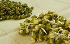 Tips Mudah Menanam Kacang Hijau Dengan Benar http://slosa.blogspot.com/2016/04/cara-menanam-kacang-hijau-dengan-benar.html