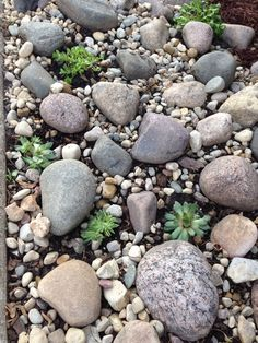 Debbie's rock garden Dream Garden, Backyard Ideas, Fence, Cactus, Landscaping, Succulents, Gardening, Patio, Rock