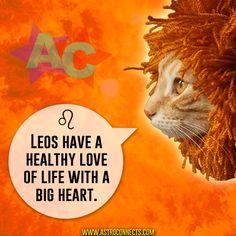 www.astroconnects.com #astrology #horoscope #zodiac #cats #compatibility #love #catsinspace #astrocats #leo