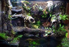 TheHydra.net • View topic - 56g Crab Loving Paludarium Gecko Terrarium, Aquarium Terrarium, Aquarium Setup, Diy Aquarium, Aquarium Design, Reptile Enclosure, Tarantula Enclosure, Paludarium, Gecko Vivarium