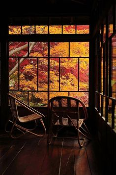 Gardening Autumn - Japanese Garden in Morioka, Iwate, Japan Arquitectos Zaha Hadid, Art Japonais, Window View, Through The Window, Japanese House, Japanese Gardens, Autumn Leaves, Autumn Trees, Beautiful Places
