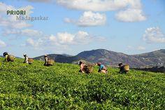 Auch Tee wird in Madagaskar angebaut. Im südlichen Hochland bei Fianarantsoa findet sich die einzige Teeplantage des Landes. Sie kann besichtigt werden und ist ein interessanter und schöner Zwischenstopp auf einer Madagaskar-Reise. Vegan Breakfast Recipes, Vegan Recipes Easy, Natural Interior, Vegan Crackers, Whole Grain Bread, Coconut Yogurt, Fiber Foods, Kinds Of Salad, Evening Meals
