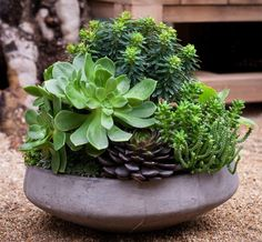 CactusSucculent container gardens on Pinterest