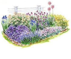 Beginner Perrenial Garden for Full Sun (with flowers to bloom from spring to fall)