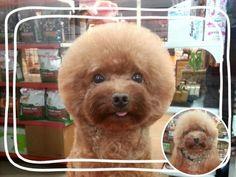 toilettage chien particulier taiwan 5