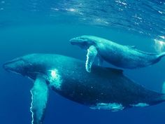 national geographic whales - Google Search