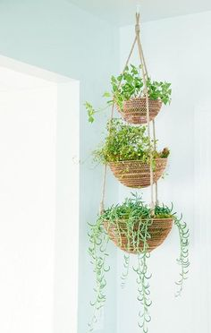 Plant Basket, Basket Planters, Indoor Planters, Planter Ideas, Indoor Hanging Plants, Outdoor Plants, Diy Hanging Planter, Hanging Planters, Hanging Herbs