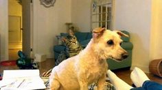 Cat is confused by her poodle brother's new haircut. - GIF on Imgur