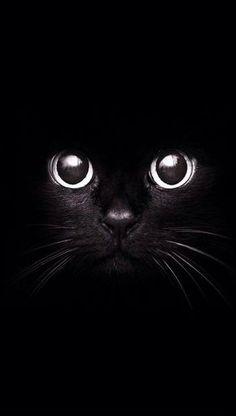 Black cat dibujo y pintura cat wallpaper, cat photography y cats. Tier Wallpaper, Cat Wallpaper, Animal Wallpaper, Tumblr Wallpaper, Wallpapers Tumblr, Mobile Wallpaper, Handy Wallpaper, Screen Wallpaper, Hipster Iphone Wallpapers
