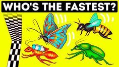 Wordpress, Bugs, Racing, Scary, Insects, Running, You Complete Me, Beetles, Auto Racing