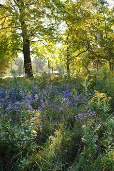 Fall: Purple flowers and dappled light