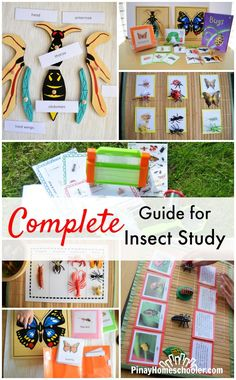 Complete Guide to Insect Study for Grade-Schoolers Complete Insect Study GuideYou can find Insects and more on our website.Complete Guide to Insect Study for Gr. Creative Curriculum Preschool, Montessori Science, Kindergarten Science, Montessori Homeschool, Teaching Science, Teaching Ideas, Insect Activities, Preschool Activities, It's All Happening