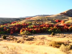 City Creek fall colors 2012, Pocatello Idaho