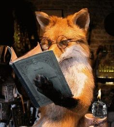 What does the fox say? Read more books!