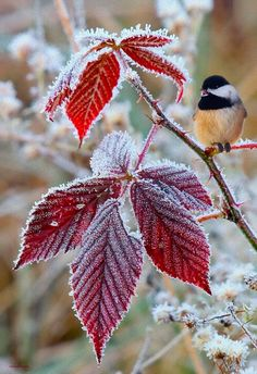 18 Stunning Photos of Beautiful Birds A in Winter Wonderland Winter Szenen, Winter Magic, Winter Time, Winter Christmas, Merry Christmas, Holiday, Beautiful Birds, Beautiful World, Beautiful Pictures