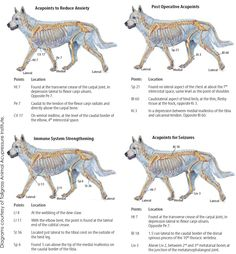 How Offering Acupressure And Other Alternative Modalities Can Benefit Your Animal Clinic As Well As Your Patients | Animal Wellness Guide