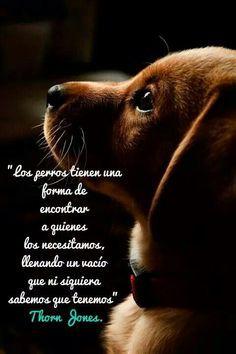 """""""Los perros tienen una forma de encontrar a quienes los necesitamos, llenando un vacio que ni siquiera sabemos que tenemos"""" Torn Jones"""