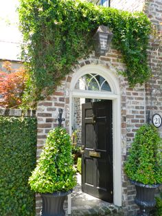 Beautiful entrance with Creeping fig, topiaries, ⌂ #landscape