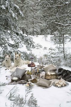 Gorgeous Winter Picnic with White Shepards