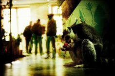 Zoo by Denis Tarasov