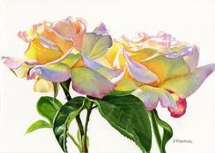 Peace Rose Watercolor Painting | Peace Roses by Sharon Freeman - Two Peace Roses Painting - Two Peace ..