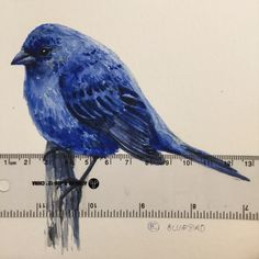 Hello Mr. Bluebird...Oh, you don't have a home either? I'll tell All my friends...and maybe they would like to give you a home.                           Www.instagram.com/shopblueshineart #blueshineart #original #art