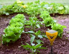 Garden gadgets that automatically water plants when they are thirsty.