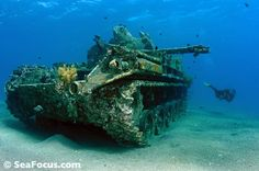 A tank near the wreck of the Cedar Pride Underwater Video, Underwater Sea, Adventure Of The Seas, South Pacific, Dusters, Scuba Diving, Military Vehicles, Art Boards, Philippines