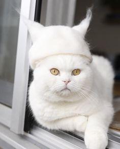 Bizarresia | Gatos con sombreros de su propio pelo