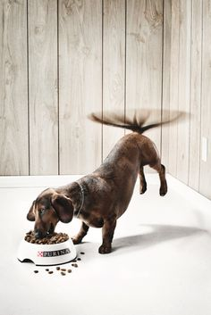 Funny Print Ads. cute excited chopper puppy