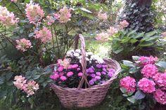 Jak využít barevné květy hortenzie | návod na květinový věnec