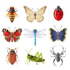 This page contains great collection of funny Insects facts, amazing Insects facts, interesting Insects facts, Bug facts, Bee facts. Aboriginal Language, Bee Facts, Pictures Of Insects, 3rd Grade Art, Grade 3, Insect Art, Science Photos, Gifted Kids, Arts Ed