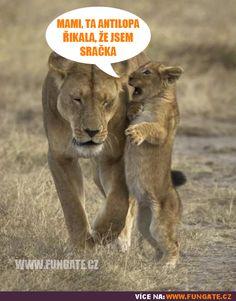 Stupid Memes, Pranks, Funny Images, Haha, Harry Potter, Jokes, Safari, Animals, Humorous Pictures