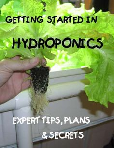 You've heard how fast plants grow in a hydroponics system...