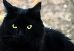 Google Image Result for http://clinicallypsyched.com/cp-images/superstition-black-cat.jpg