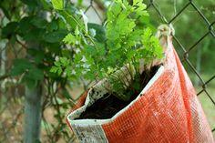 Vertical Gardening: Make a Recycled Hanging Herb Planter
